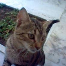 doroti Profile Picture